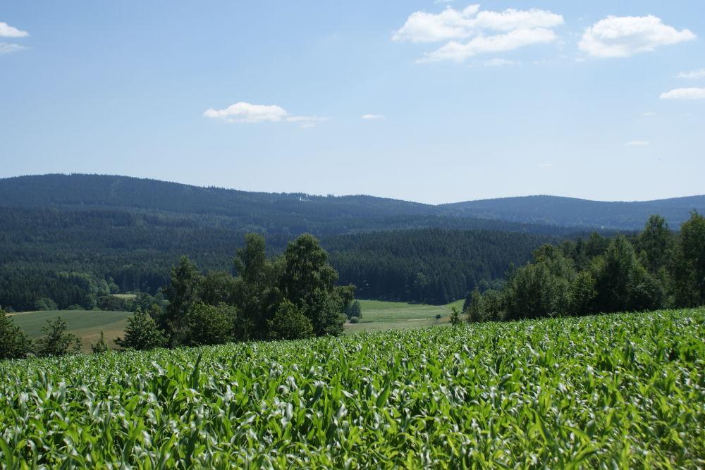 Landschaft Tännesbühl Neualbenreuth