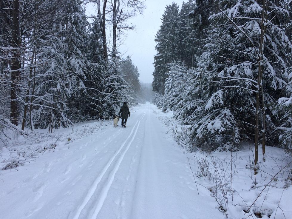 Loipe Winter Neualbenreuth