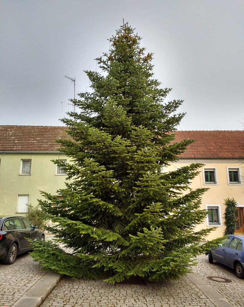 Christbaum Neualbenreuth 2016