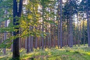 Waldschnuppern